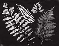 Nature by the Lake Ferns II Black Crop Fine Art Print