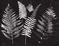 Nature by the Lake Ferns I Black Crop Fine Art Print