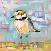 Coastal Plover II Fine Art Print