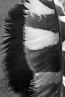 Feather Shadow III Fine Art Print