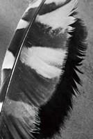 Feather Shadow I Fine Art Print