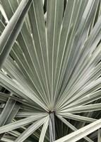 Organic Palm I Fine Art Print