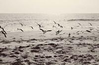 Dream of the Beach I Fine Art Print