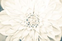 Bright White Bloom I Fine Art Print