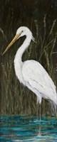 White Egret Fine Art Print