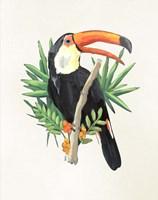 Toucan I Fine Art Print