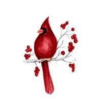 Winter Cardinal in Red II Fine Art Print
