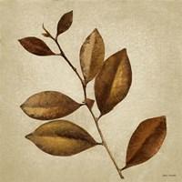 Antiqued Leaves II Fine Art Print