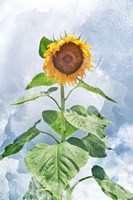 Summer Sunflower Fine Art Print