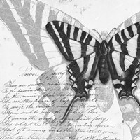 Butterflies Studies II Fine Art Print