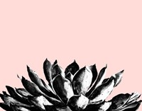 Agave on Blush Fine Art Print
