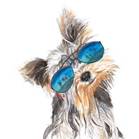 Yorkie with Shades Fine Art Print