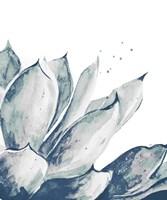 Blue Agave on White II Fine Art Print