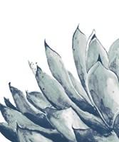 Blue Agave on White I Fine Art Print