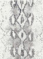 Snake Skin Fine Art Print
