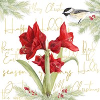 Merry Amaryllis I Fine Art Print