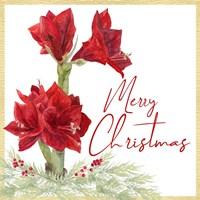 Merry Amaryllis VI Fine Art Print