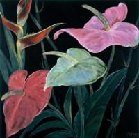 In Bloom II Fine Art Print