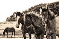 Horses Three Sepia Fine Art Print