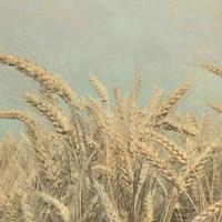 Gold Harvest Crop Fine Art Print