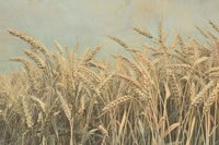 Gold Harvest Panel Fine Art Print