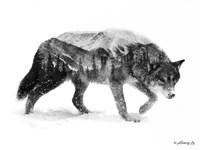 Black & White Wolf Fine Art Print