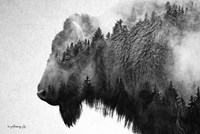 Black & White Bison Fine Art Print