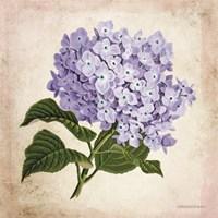 Vintage Lilac Fine Art Print