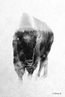 Black & White Buffalo Fine Art Print