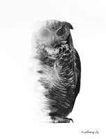 Black & White Owl Fine Art Print