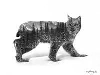 Black & White Bobcat Fine Art Print