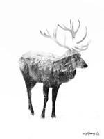 Black & White Elk Fine Art Print
