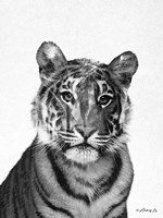 Black & White Tiger Fine Art Print