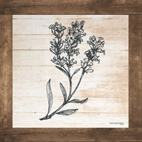 Petals on Planks - Lavender Fine Art Print