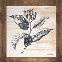 Petals on Planks - Allspice Fine Art Print