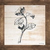 Petals on Planks - Celery Fine Art Print