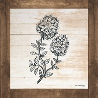 Petals on Planks - Thyme Fine Art Print