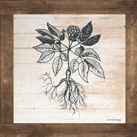Petals on Planks - Ginseng Fine Art Print