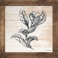 Petals on Planks - Bay Leaf Fine Art Print