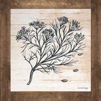 Petals on Planks - Cumin Fine Art Print