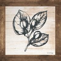 Petals on Planks - Capers Fine Art Print
