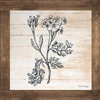 Petals on Planks - Achilles Fine Art Print