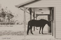 Horse at Home Fine Art Print
