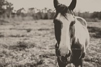 Friendly Horse Fine Art Print