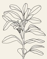 Olive Branch Contour I Fine Art Print