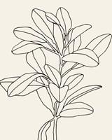 Olive Branch Contour II Fine Art Print