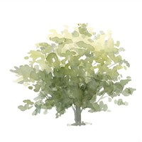 Lonely Oak I Fine Art Print
