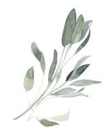 Simple Sage I Fine Art Print
