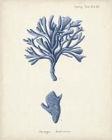 Antique Coral in Navy IV Fine Art Print