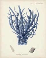 Antique Coral in Navy V Fine Art Print